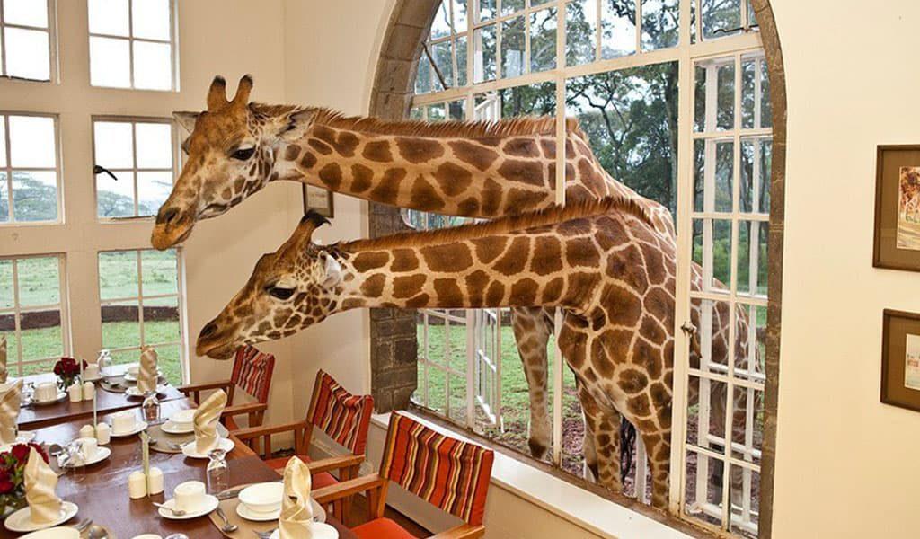 Куда поехать ТОП самых необычных отелей мира Giraffe Manor