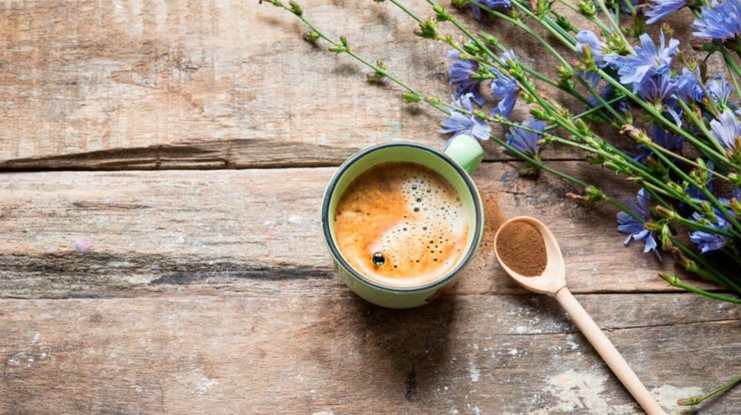 Альтернатива кофе: цикорий и его полезные свойства