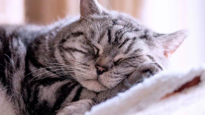 Интересные факты о том, как спят животные