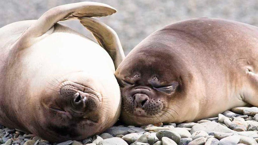Как спят животные тюлени спят