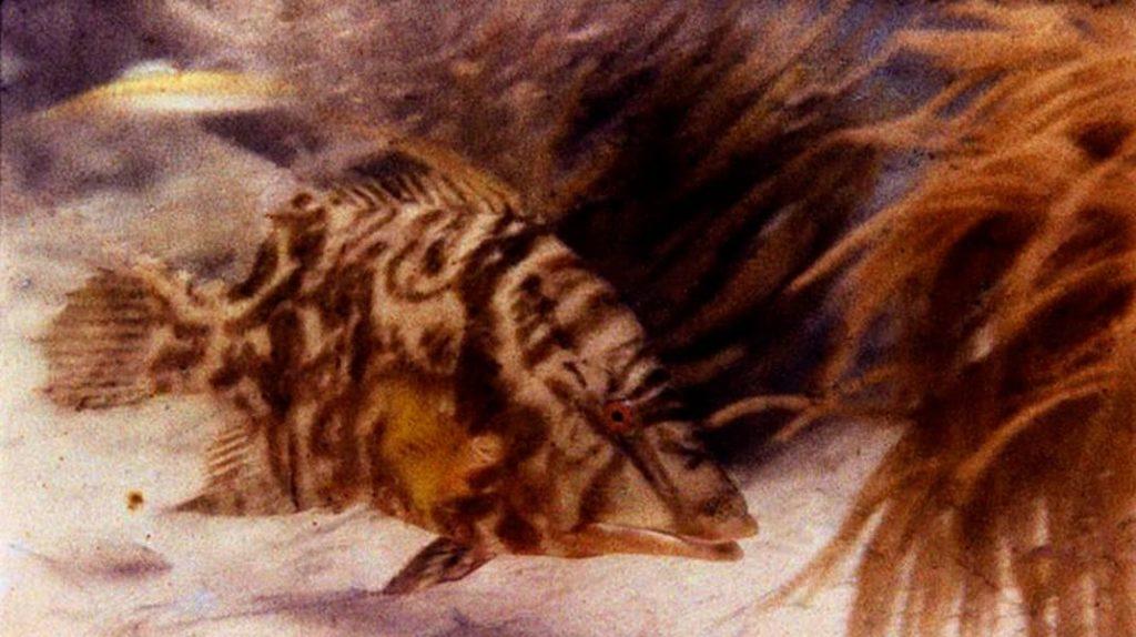 National Geographic Чарльз Мартин, Уильям Лонгли, первая фотография в мире