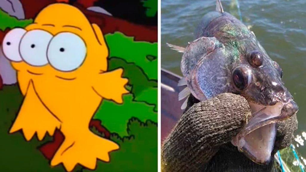 Трехглазая рыба, рыба с тремя глазами, Симпсоны, лайфхаб