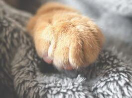 Стоит ли заводить кота? 7 весомых причин в пользу усатых